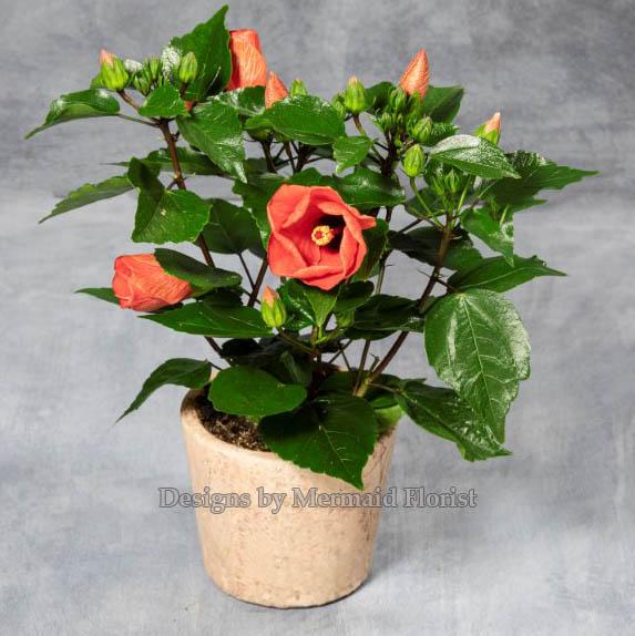 Flowering Plant in Ceramic